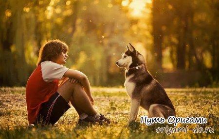 Польза собаки для человека